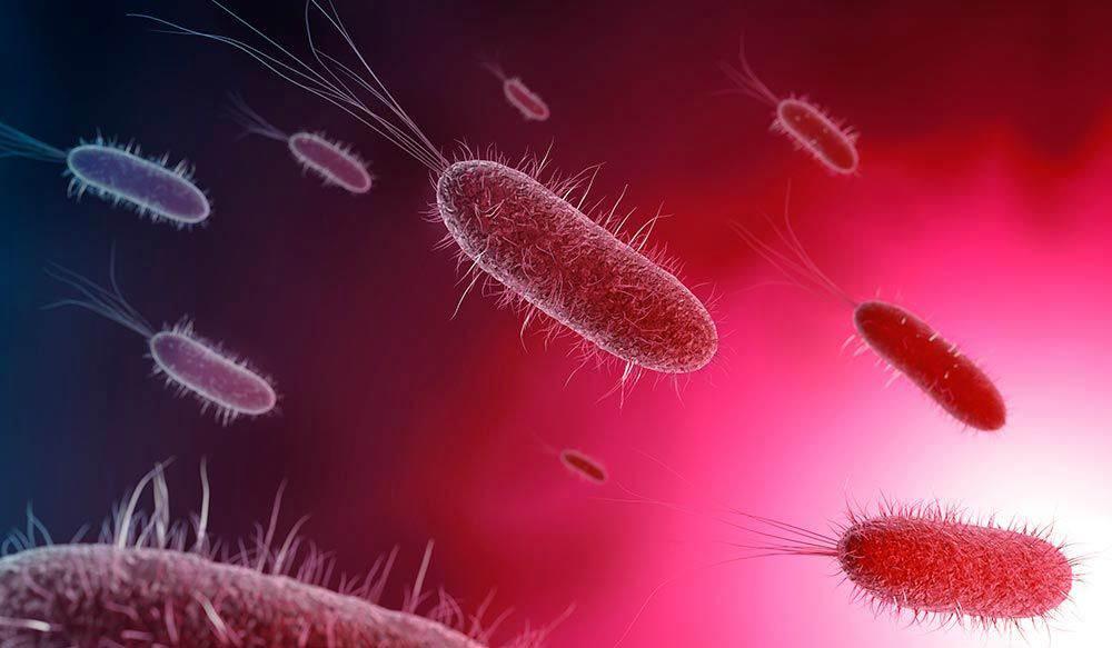 Tratamiento helicobacter pylori