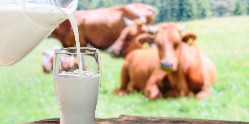 Alergia a las proteínas de la leche de la vaca dieta y recomendaciones