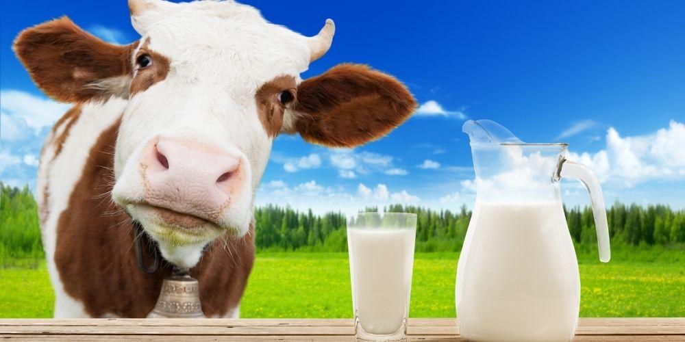 Diferencias entre alergia a la leche e intolerancia a la lactosa